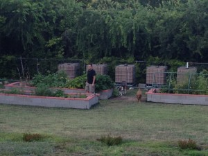My husband, dogs, vegetable garden and water harvesting system.